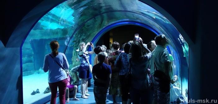 Океанариум на ВДНХ - Москвариум: отзыв с фото, график работы, цена билета, как добраться