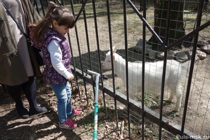 Девочка у вольера с козой