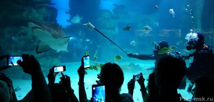 аквалангисты с акулами